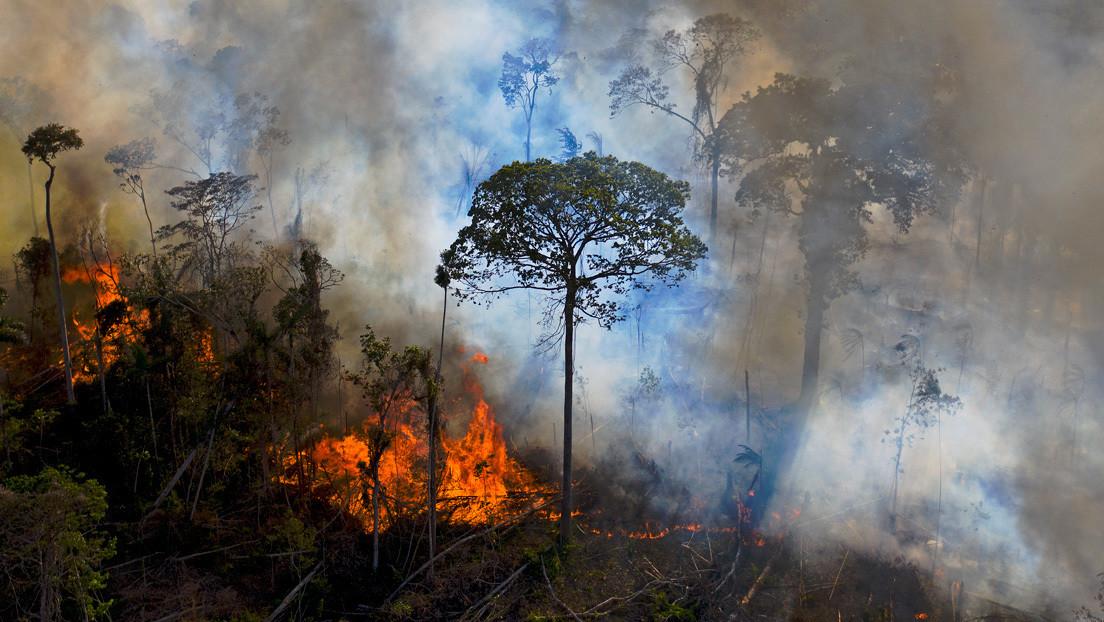 """Bolsonaro confirma que no hay """"Nada que quemar"""" s """"Ni siquiera una hectárea de bosque destruido"""" En amazon"""